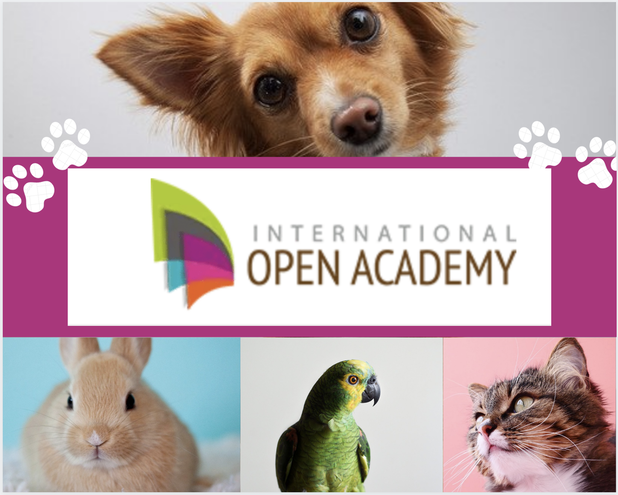 internationalopenacademy.com