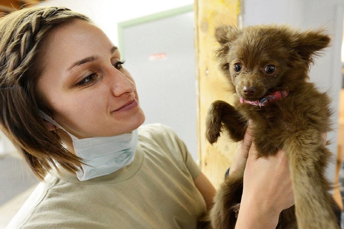 puppy with vet, brown puppy at vet, vet holding puppy